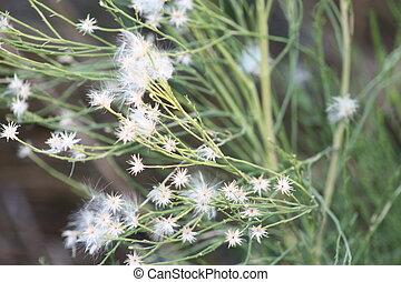 Wistful Flowers - Wistful White Flowers