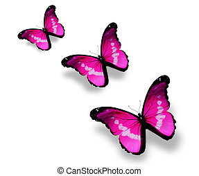 Three violet butterflies, isolated on white