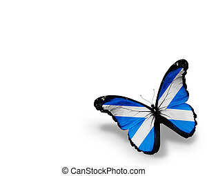 Scottish flag butterfly, isolated on white background