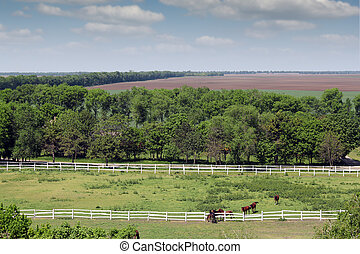 farmland and herd of horses in corral aerial view