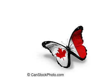 Canadian flag butterfly, isolated on white background