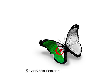 Algerian flag butterfly, isolated on white background