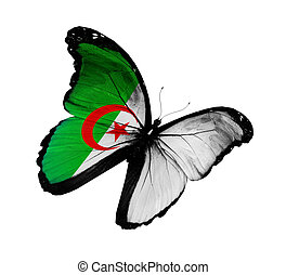Algerian flag butterfly flying, isolated on white background