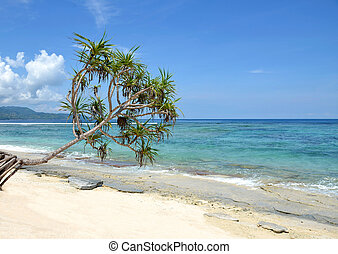 Palm tree hanging over beach with ocean