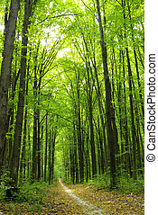 Forest - Green enchanted forest path