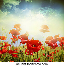 Poppy flowers - Poppy flower in the sky