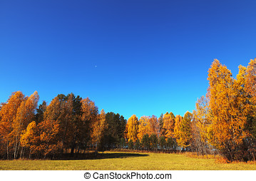 Autumn, HDRI - Image processed for high dynamic range color...
