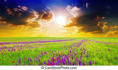 field of spring flowers at sunset