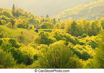 Spring landscape in the Carpathian mountains - Spring gold...
