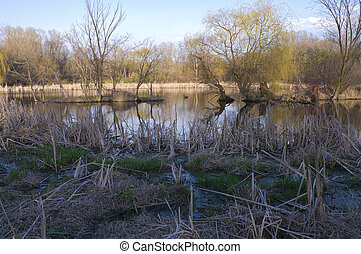 Wetlands Reeds and Trees - Wetlands reeds and trees at Dodge...