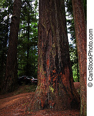 Island Forest - WA - This forest is located in Moran State...