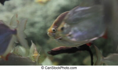shot of fish in an aquarium