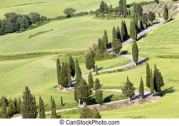 Tuscan roads - View on the winding roads through the rolling...