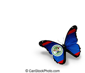 Belize flag butterfly, isolated on white background