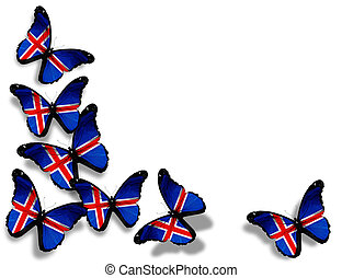 Icelandic flag butterflies, isolated on white background