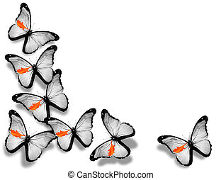 Cyprian flag butterflies, isolated on white background