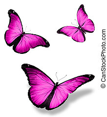 """Three violet butterfly """"morpho"""", isolated on white..."""