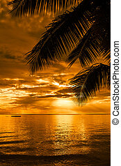 Palm trees silhouette on a beautiful beach at sunset - Palm...