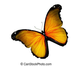 Yellow butterfly on white background