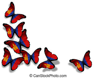 Mongolian flag butterflies, isolated on white background