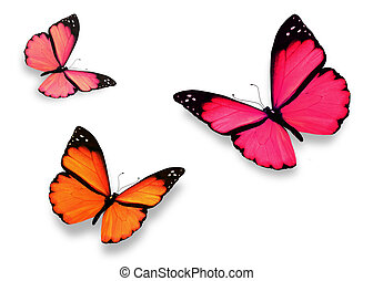 Three butterflies, isolated on white