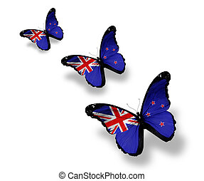 Three New Zealand flag butterflies, isolated on white