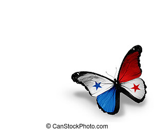 Panamanian flag butterfly, isolated on white background