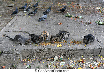 Hungry cats - hungry cats and pigeons about cats