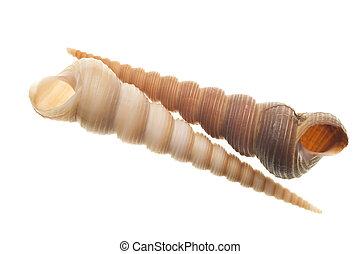 Shells isolated on white - Seashells isolated on white...