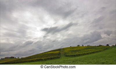 vineyard with dramatic sky timelaps - green yellow vineyard...