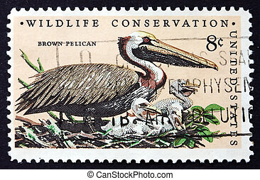 Postage stamp USA 1972 Brown Pelican, Bird - UNITED STATES...
