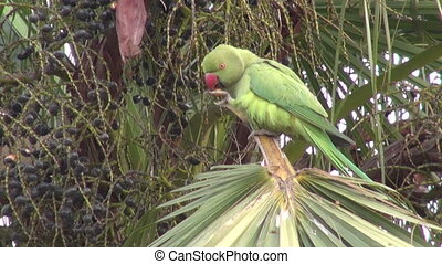 one green parrot on palm tree