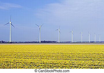 Windturbines in the flower fields in the countryside from...