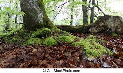 Forest Floor - Moss and tree stump on a forest floor