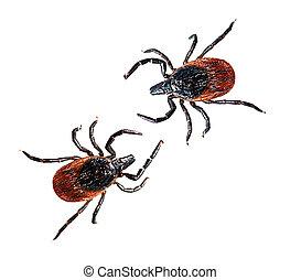 Black legged deer tick - Ixodes scapularis aka dog, cat tick...