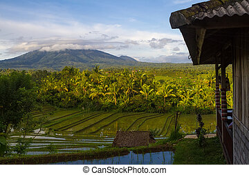 volcán, nubes, arroz, campos, primer plano