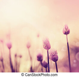 Chives flowers - Fresh chives flower over colorful...