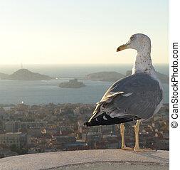 Seagull Overlooking Marseille