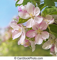Peach blossom flowers in spring