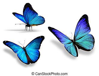 Trois, bleu, papillon, isolé, blanc, fond