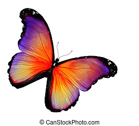 Violet yellow butterfly on white background
