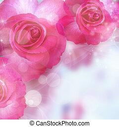 pink roses and bokeh