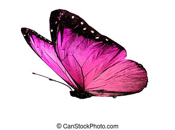 Pink butterfly Illustrations and Clip Art. 16,545 Pink butterfly ...