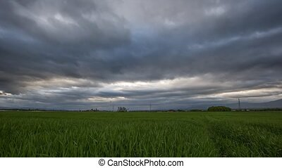 Wheat field and Clouds Time Lapse