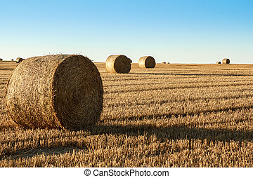 hay bale in the foreground of rural field - hay bale in the...