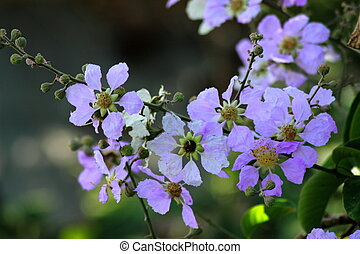 Purple flowers in a spring time garden