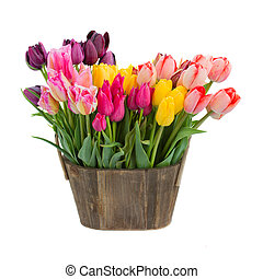 tulip flowers in wooden pot isolated on white background