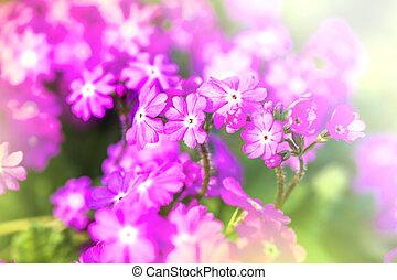 Defocus beautiful purple flowers