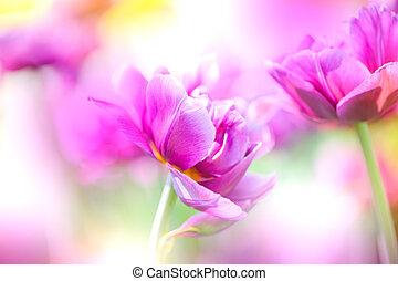 Defocus beautiful purple flowers.