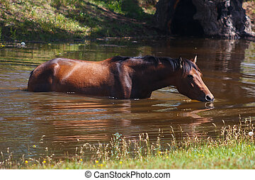 Beautiful horse bathed in a small summer river